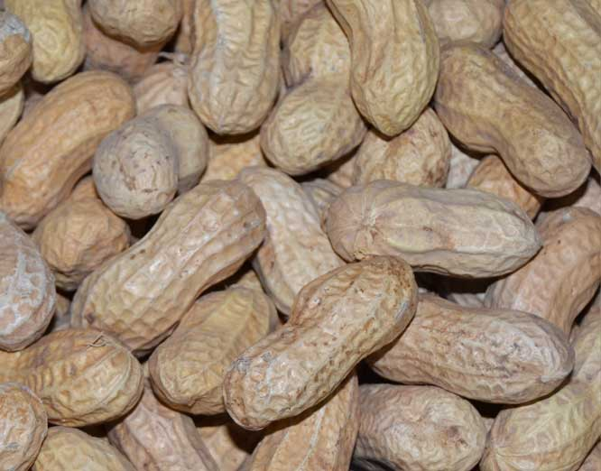 In-Shell Virginia Peanuts